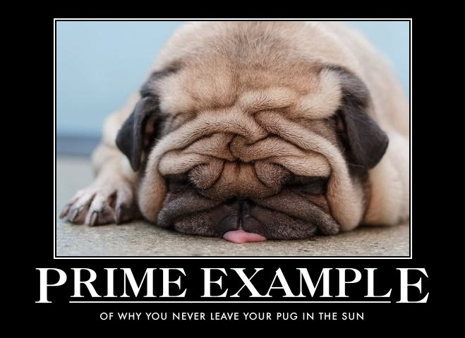 Never leave your pug in the sun!
